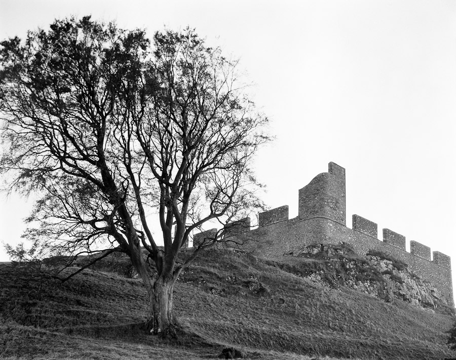 Hume Castle and Tree
